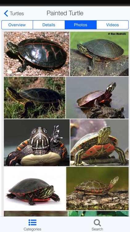 Regional Reptiles screenshot-3