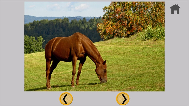 kids love horses - free game screenshot-4