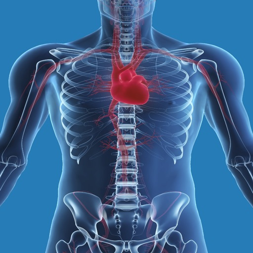Human Biology : Cardiovascular System Quiz