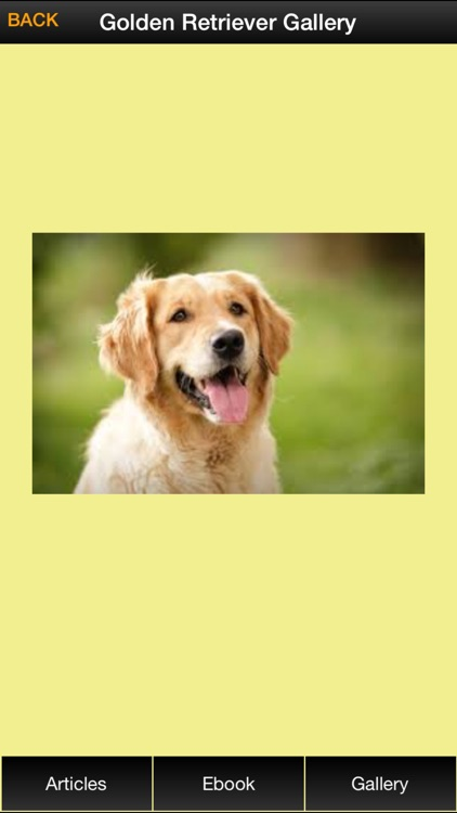 Golden Retriever Guide - Everything You Need To Know About Golden Retriever ! screenshot-4