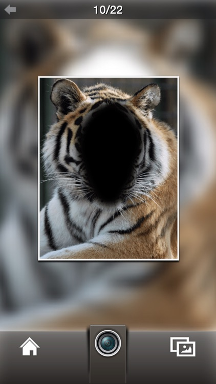 Photo Fun Animal screenshot-3