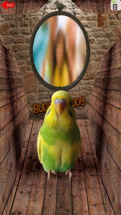 Budgie Buddy