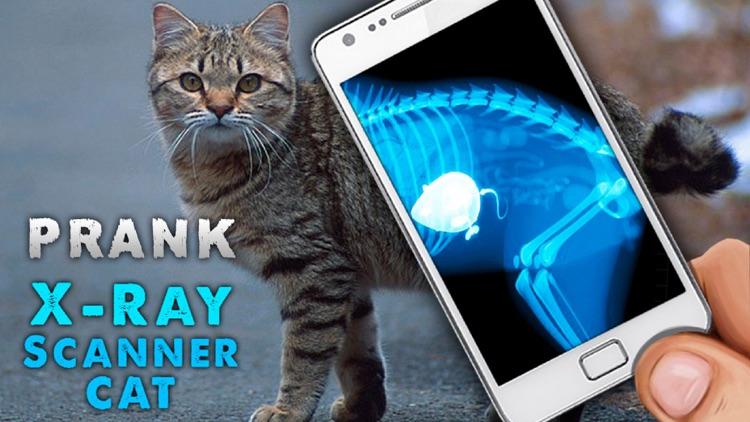 Simulator X-Ray Cat