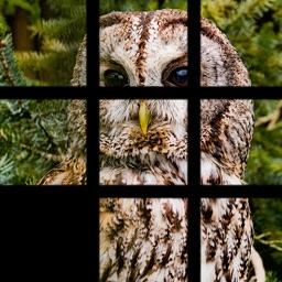 PicFuz : Free Picture Puzzle