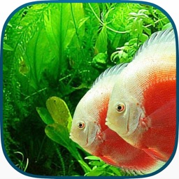 Tanked Aquarium 3D - Relaxing Tropical Scenes with Coral Reef, Sharks & Fish Tank