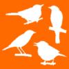 Vogel bestimmen