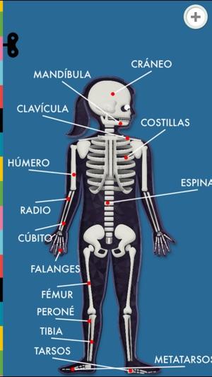 El Cuerpo Humano por Tinybop en App Store
