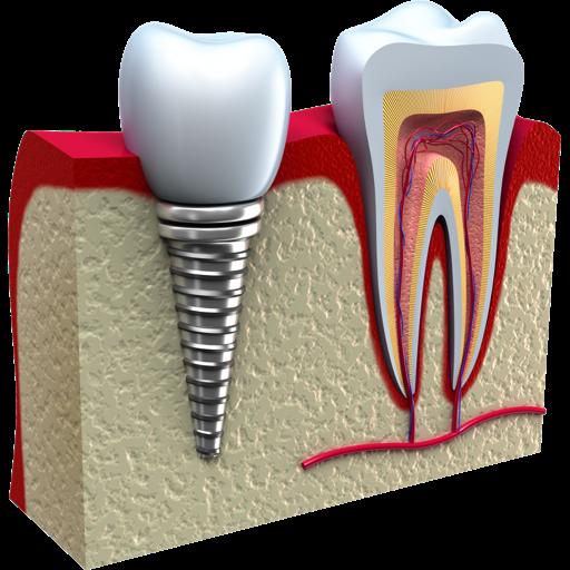 Simple Odontogram