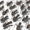 My Pet Ants