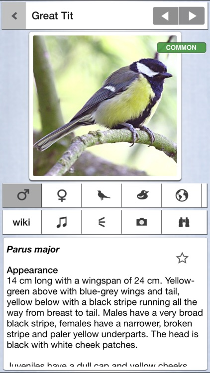 Birds of the Netherlands: A Pocket Guide from iSpiny
