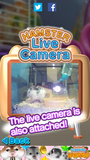 Live hamster cam can not