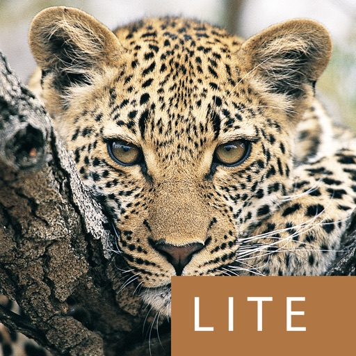 eGuide to Mammals of Southern Africa LITE