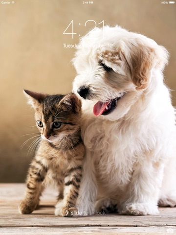 Cats Dogs Hd Wallpapers And Backgrounds App Price Drops