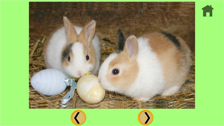 rabbits of my kids - free screenshot-3