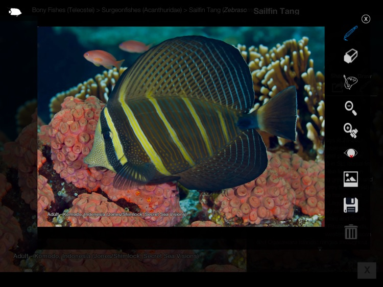 Reef Fishes of the East Indies (Vol. 3) screenshot-4