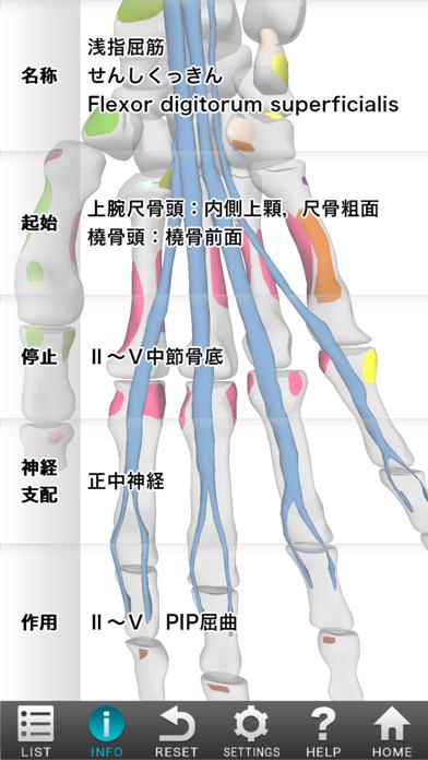 3D筋肉図鑑 ScreenShot3