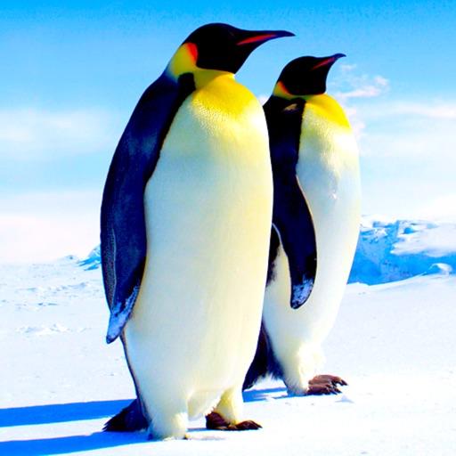 Amazing Animals HD