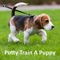Dog Potty Training Guide is  the Complete video guide for you to train your puppy for potty
