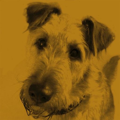 i-Doggypat