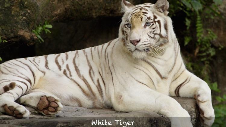 Threatened Species screenshot-4