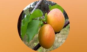 Fruits Database