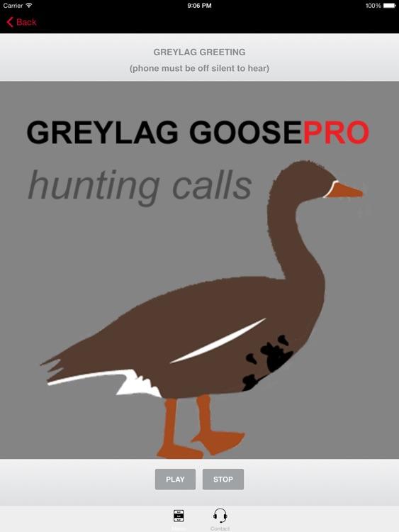 REAL Greylag Goose Hunting Calls & Greylag Goose CALLS + Greylag Goose Sounds! screenshot-0
