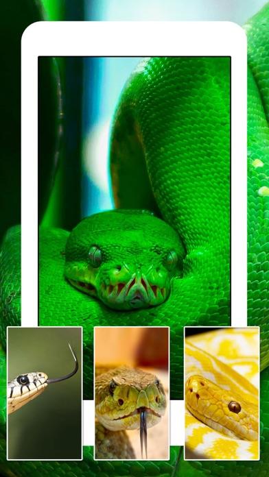 ヘビ トカゲ クモ綱 ワニ - 動物 爬虫類 壁紙 Wallpapersのおすすめ画像5