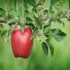 Fruits Info+