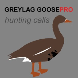 REAL Greylag Goose Hunting Calls -- Greylag Goose CALLS & Greylag Goose Sounds! (ad free) BLUETOOTH COMPATIBLE