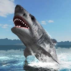 Activities of Great White Shark Survival
