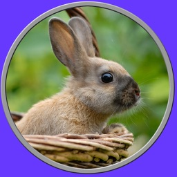 beautiful amazing rabbits for kids - no ads