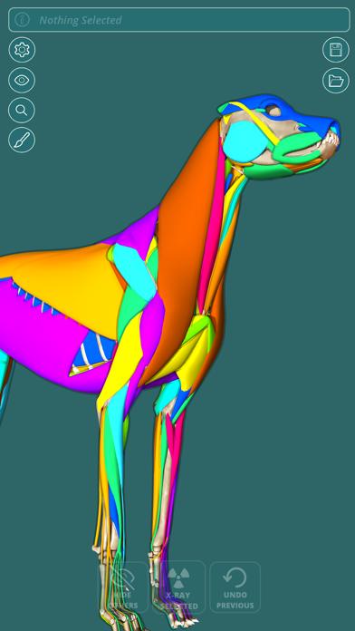 Visual Anatomy - Canine screenshot three