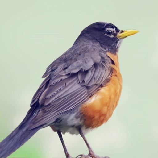 Robin Sounds
