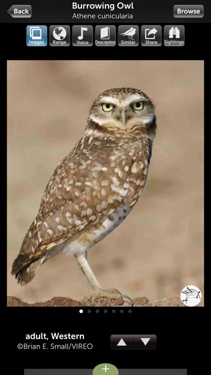 Audubon Bird Guide: Owls – Field Guide