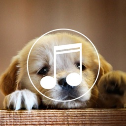 Puppy Sounds:Calming Music For Relaxation & Sleep