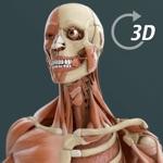Visual Anatomy 3D   Human
