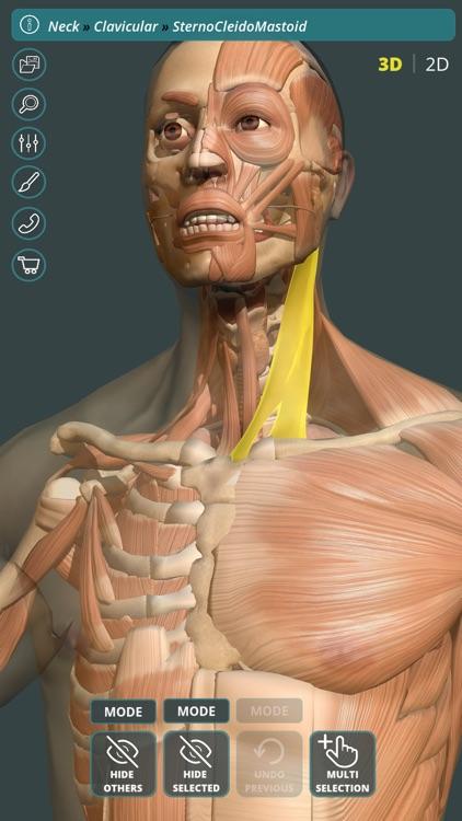 Visual Anatomy 3D | Human