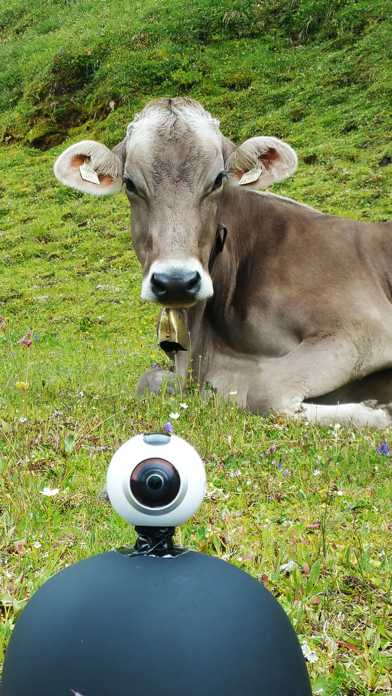 VR Kissed by Cow and Sheep Virtual Reality 360 screenshot two