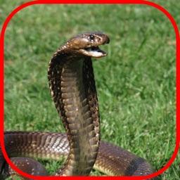 Snake Scare Prank - Prank girls with scary snake
