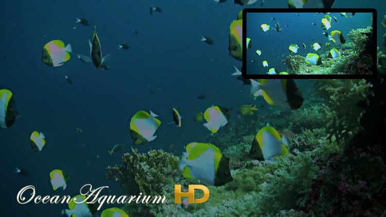 Ocean Aquarium HD screenshot-0