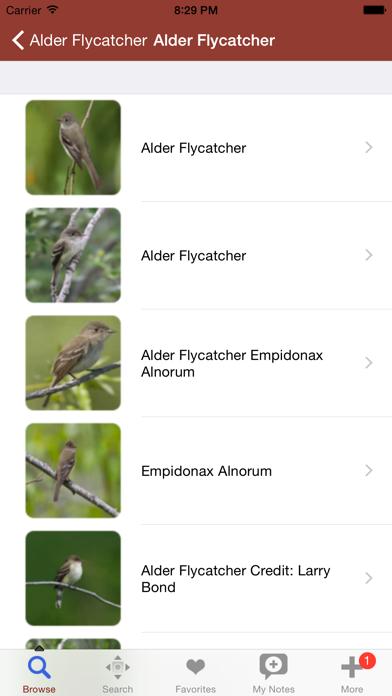 2000 鳥種。医療と解剖参照が含まれています。のおすすめ画像3