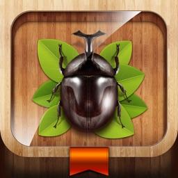 숲에서 만난 곤충