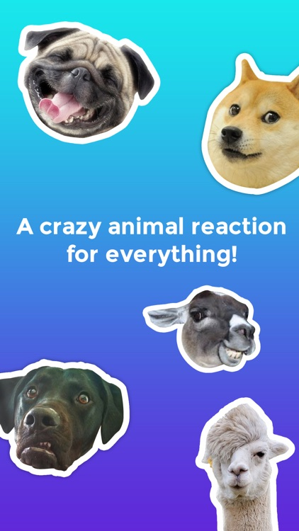 Crazy animals funny animal reaction meme stickers