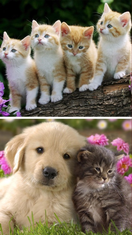 Cats Dogs Wallpapers Hd Cute Puppies Kittens By Space O Infoweb