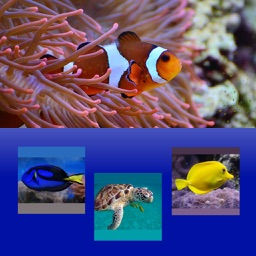 Which Is The Same Fish For Clownfish And Friends By Kozo Terai