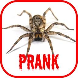 Spider Scare Prank