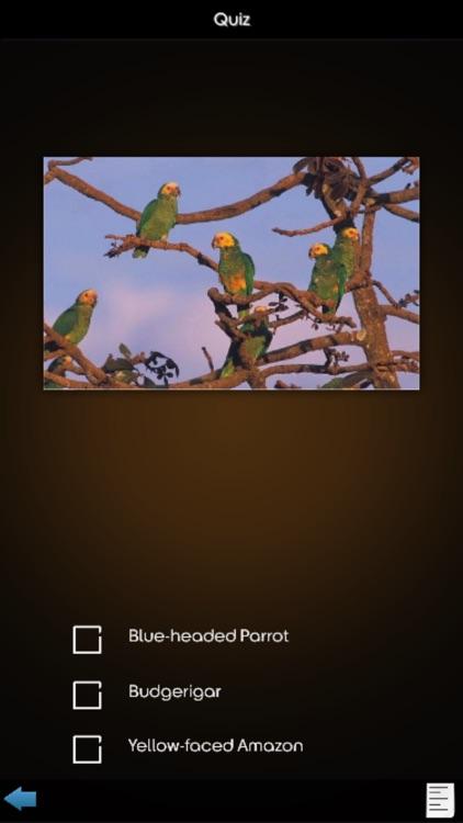 Parrot Species Guide screenshot-3