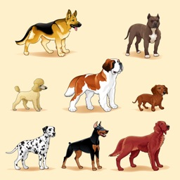 Dogs Trivia - Canis Breed Quiz