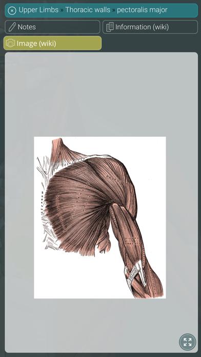 Visual Anatomy 3D | HumanScreenshot of 4