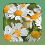 Лекарственные растения и травы на пк